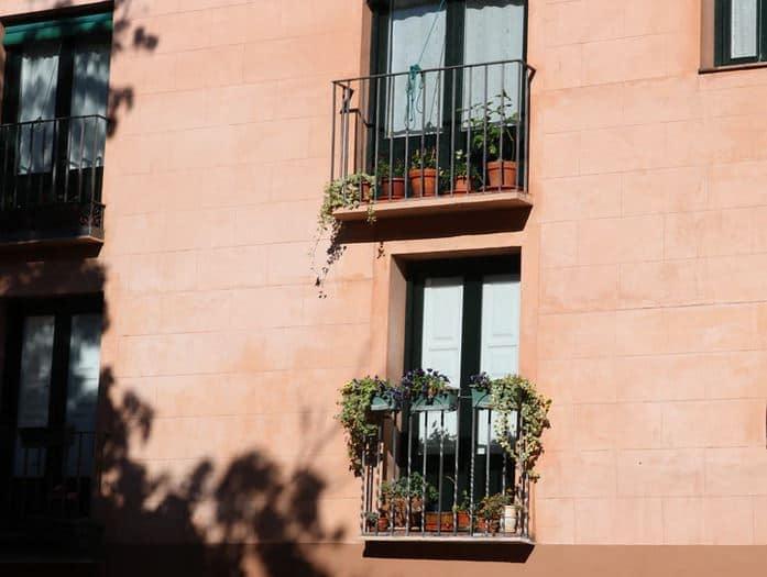 zöld növény erkélyre