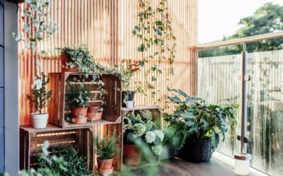 Örökzöld balkonnövények és télálló növények az erkélyre
